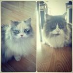 Pixi et Loona